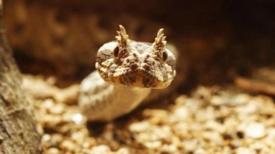 世界rpg九头蛇的装备图片