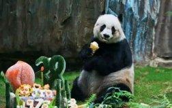世界上最高寿的大熊猫,整整活了38周岁