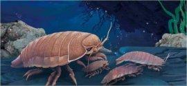 世界上最古老的生物 巨型木虱1.6亿年外形未变
