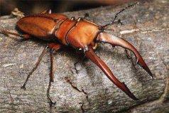 世界上最值钱的6种昆虫,个个都是天价