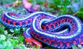 世界上最漂亮的5种蛇,基伍树蝰全身长满鳞片