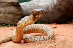 世界上陆地十大毒蛇,见到最好尽量远离