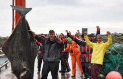 世界上最大的比目鱼,重达468斤