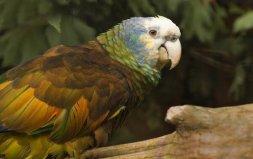 世界上寿命最长的鹦鹉,亚马逊鹦鹉活到104岁