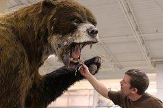 地球上体型最大的熊,巨型短面熊站立高达4.8米