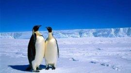 世界上最大的无人区,南极面积1390万平方公里