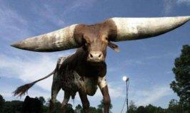 世界上最长的牛角,重180斤价值达180万