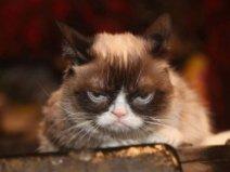 世界上收入最高的猫,不爽猫身价超6亿