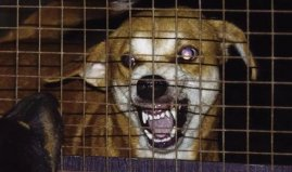 世界上最难治的传染病,狂犬病死亡率百分之百