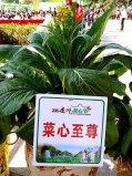 世界上最贵的蔬菜,菜心至尊拍出66万天价