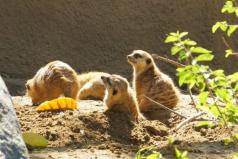世界最大的野生动物园排名,第一名在美国