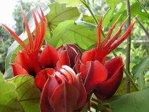 世界上最神秘诡异的花,恶魔之手排第一位