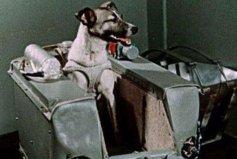 第一个被送入太空的动物,一只名叫莱卡的小狗
