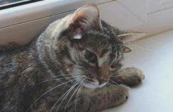世界上耳朵最多的猫,一流浪猫长有5只耳朵