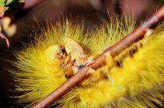世界上最恐怖的虫子,蚊子会传播很多疾病