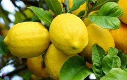 吃什么水果可以美白?十大美白水果排行榜