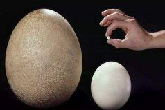世界上最小的鸟蛋,吸蜜蜂鸟蛋仅6毫米