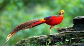 世界上最罕见美丽的十种鸟,第二种寿命达50岁