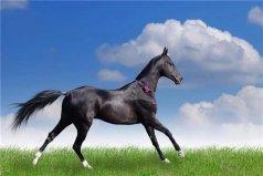 世界上最贵的三种宠物,纯血马位居首位