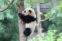 全球10大最受欢迎的动物,第一名大熊猫