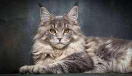 世界上最长寿的猫,露西猫活了39岁
