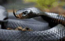 世界上速度最快的蛇,速度可以达到20公里