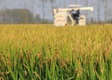 揭秘世界四大粮食巨头:美国占三家,控制着粮食