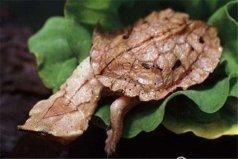 世界上十大丑陋的动物,枯叶龟名副其实