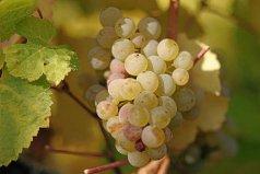 世界上最贵的八种葡萄,什么葡萄最贵?
