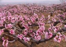 十大镇宅辟邪的植物,桃树位居首位