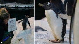 世界上最长寿的企鹅,超过41岁高龄!