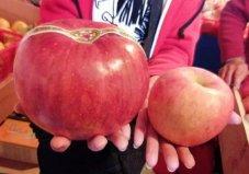 世界上最贵的苹果,日本青森苹果1个228元