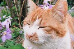 十大走红网络的动物排行榜:第一名是北大一只猫