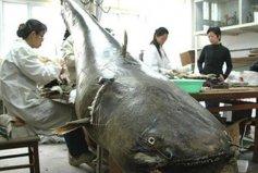 世界十大攻击力最强的淡水鱼,全都是水中的恶霸!