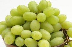 最常见的十大葡萄品种,你知道几个品种?