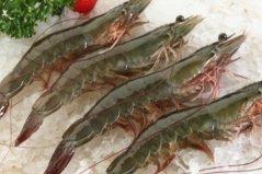 最常见的十种食用虾品种:对虾、基围虾双双入榜