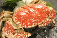 全球十大螃蟹品种:澳洲皇帝蟹位列榜首,黄油蟹上榜