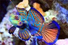 世界上最好看的鱼:青蛙鱼色彩艳丽,五彩缤纷