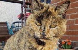 世界上年龄最大的猫:花斑家猫活了34岁